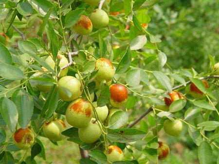 生病时吃什么水果 组图